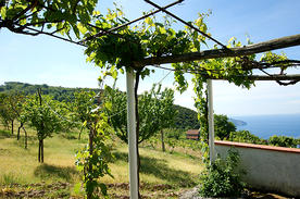 Cilento & Maratea Holiday home Casa Pallino